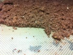 péché mignion, création,papou,100%,chocolat,caramel,streussel chocolat, mousse chocolat